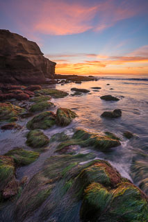Exposed Eelgrass at Sunset Cliffs