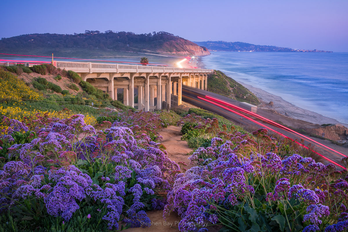 A coastal trail besides the North Torrey Pines bridge. Along the trail is purple sea lavender. The coaster train is on the right and Camino del Mar on the left.